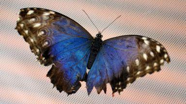 Учени: Съдбата на човечеството е свързана с тази на насекомите