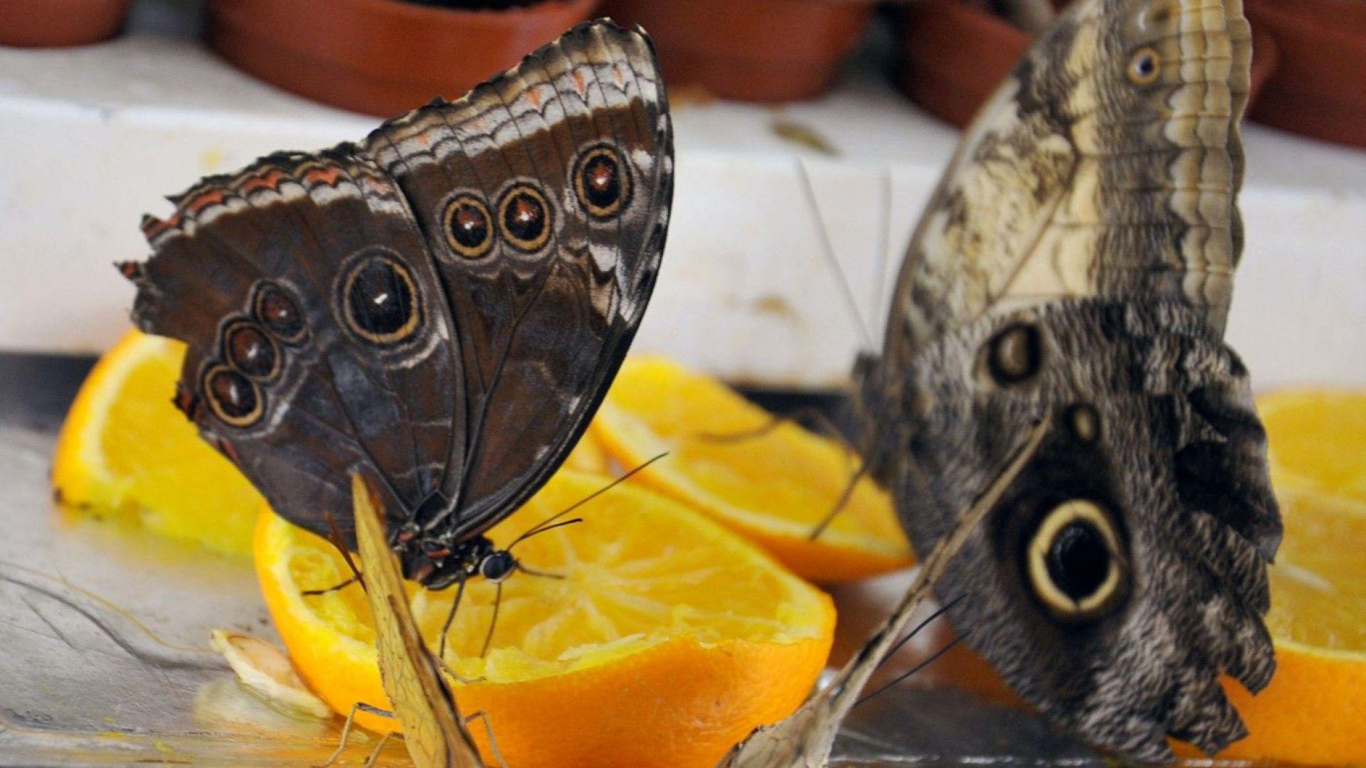 """Изложба на пеперуди в експоцентър """"Флора"""""""