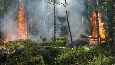 Горите в Европа не се справят с измененията на климата