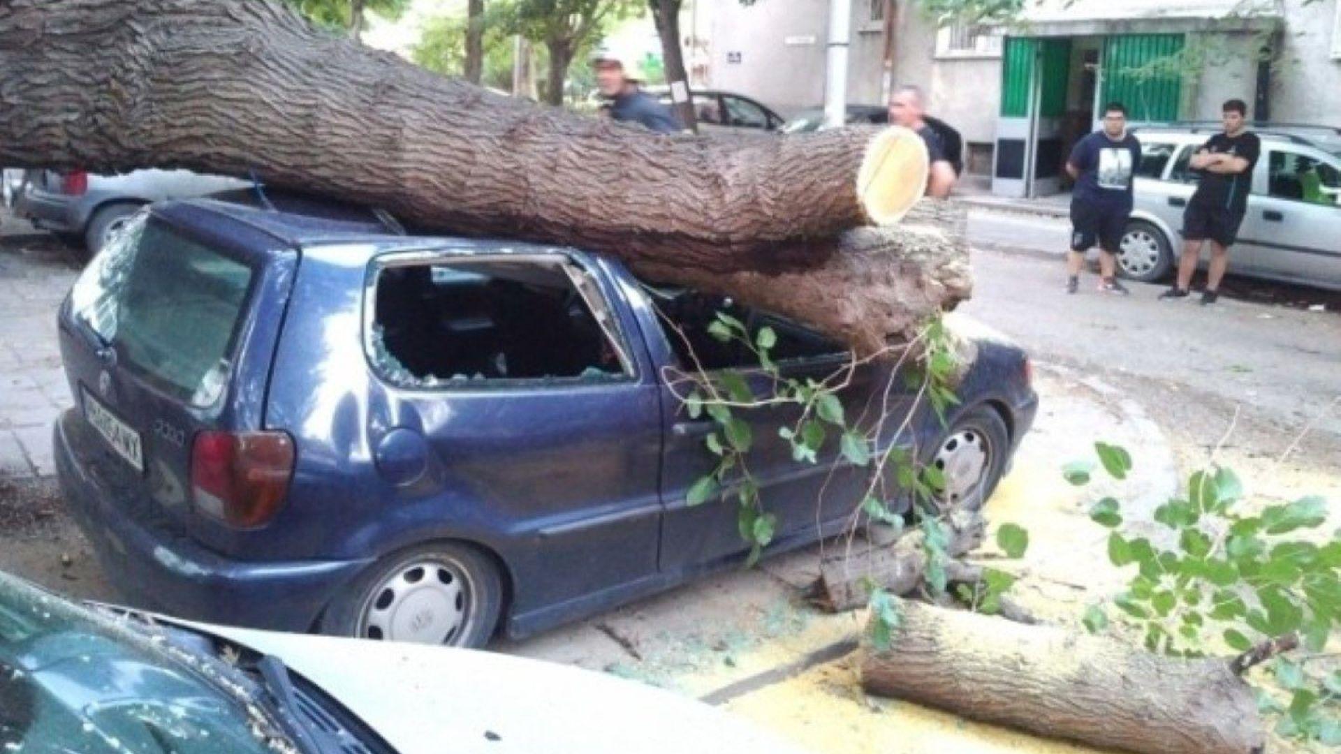 Дърво падна и премаза няколко автомобила в Пловдив