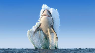 Вижте най-голямата бяла акула, заснемана някога (видео)