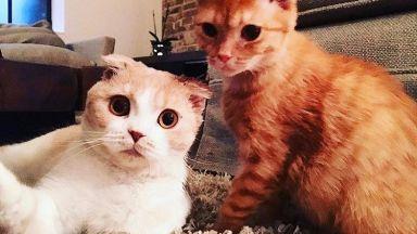 Ед Шийран откри страница за котките си в  Инстаграм