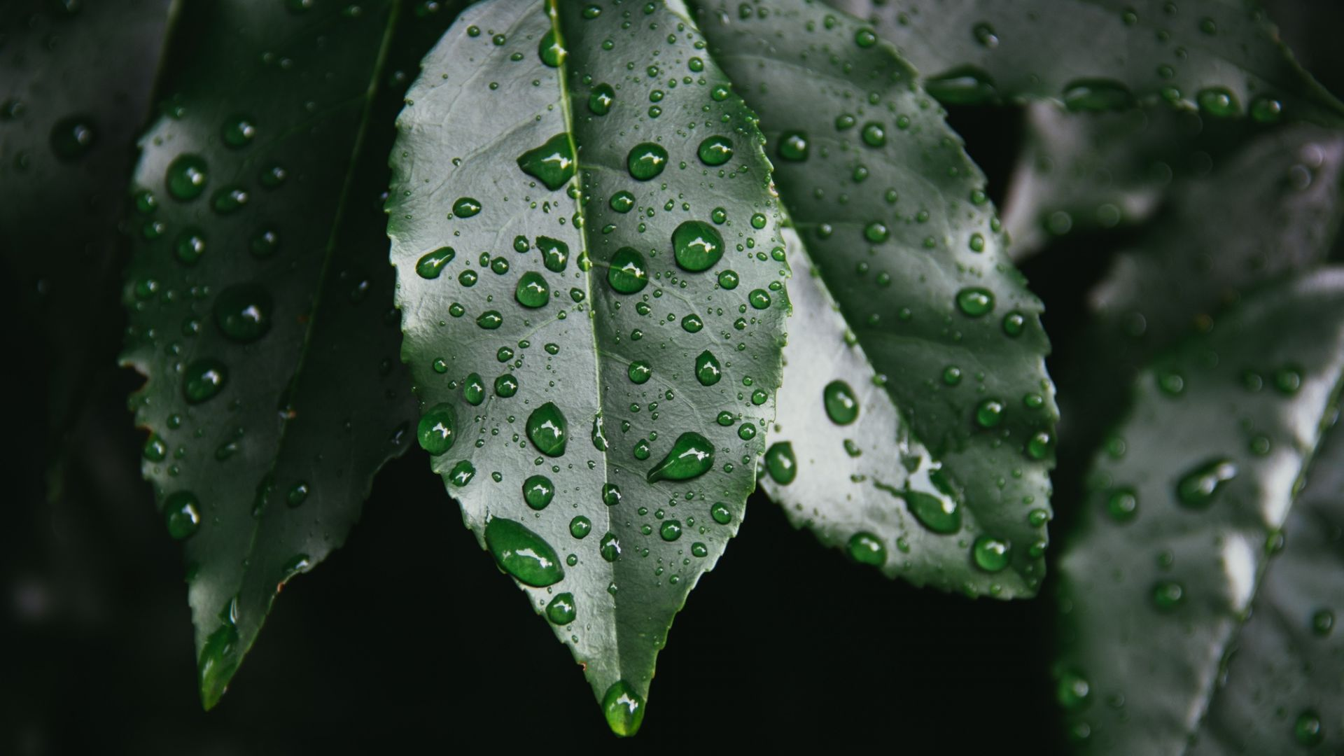 Пороен дъжд - две месечни норми за половин час (видео)