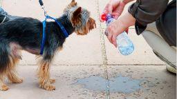 Как да предпазим кучето си от жегата (видео)