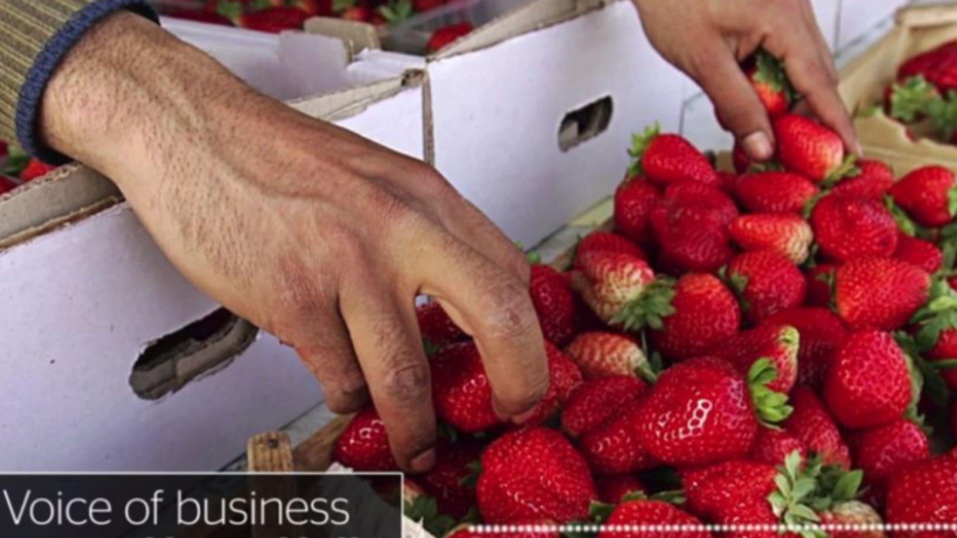 Паника във Великобритания: Кой ще прибира реколтата след Брекзит?