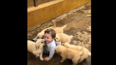 Обичливи кученца повалят на земята това малко момченце (видео)