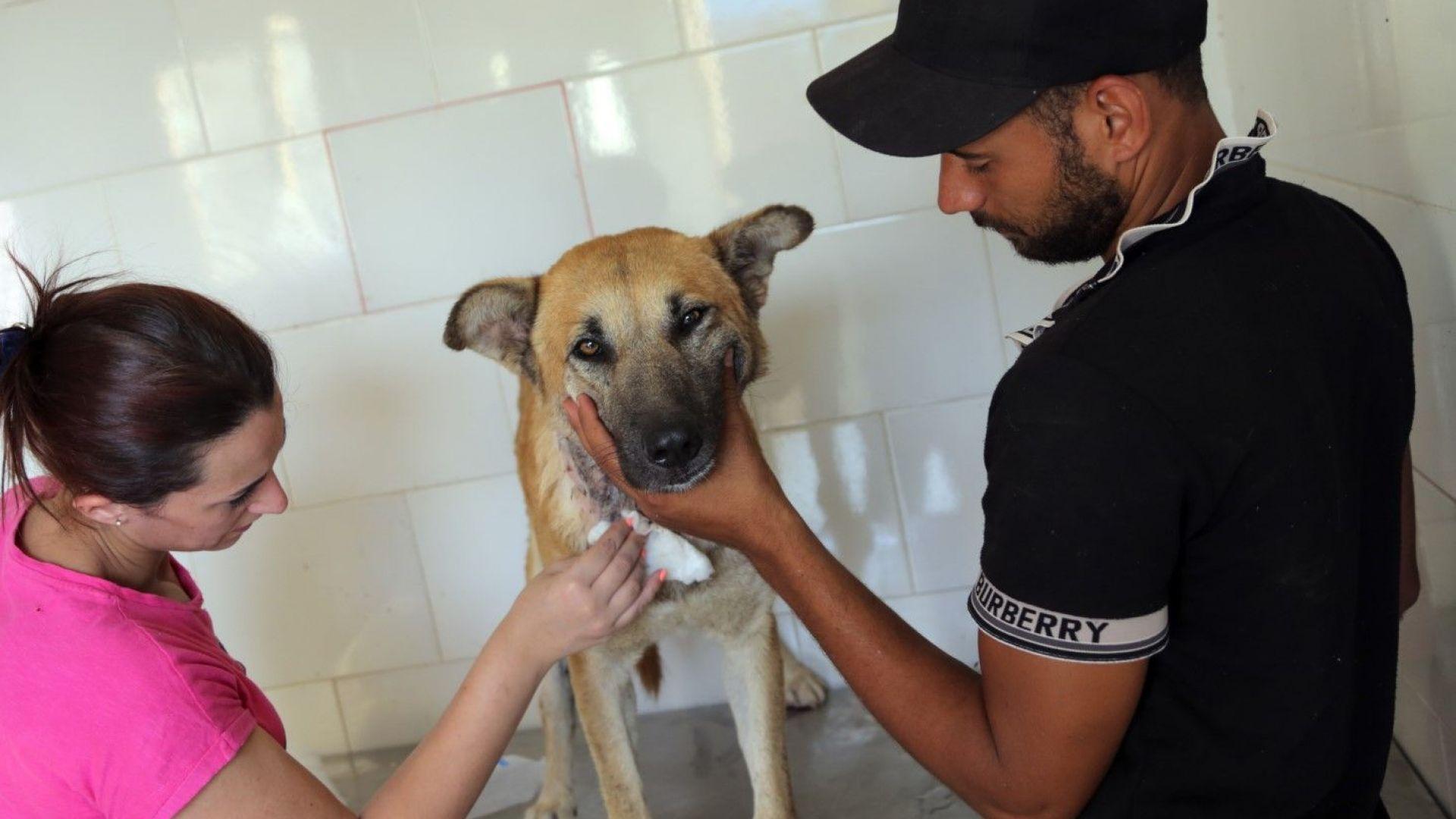 Столична община: Намаляват бездомните кучета,  но се увеличават котките