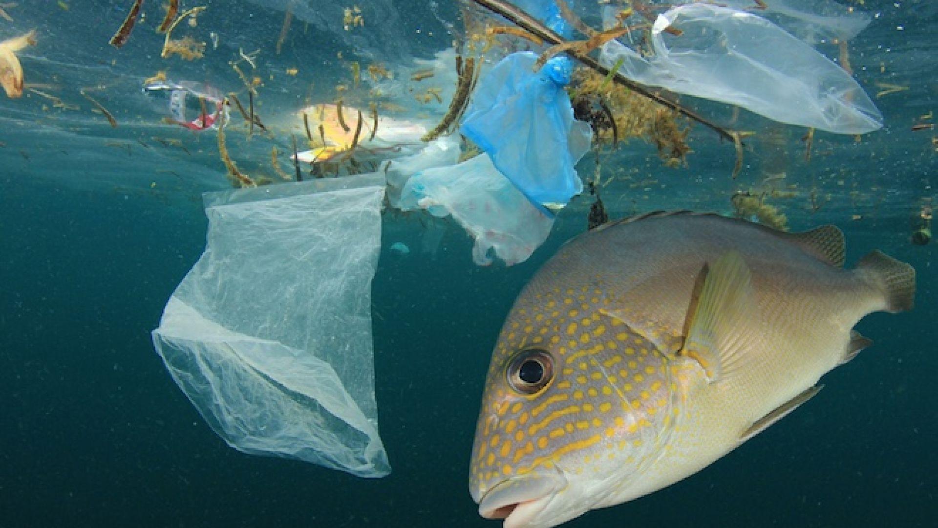 Пластмасовите отпадъци усилват глобалното затопляне