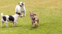 Най-много са бездомните кучета в столичния район Сердика