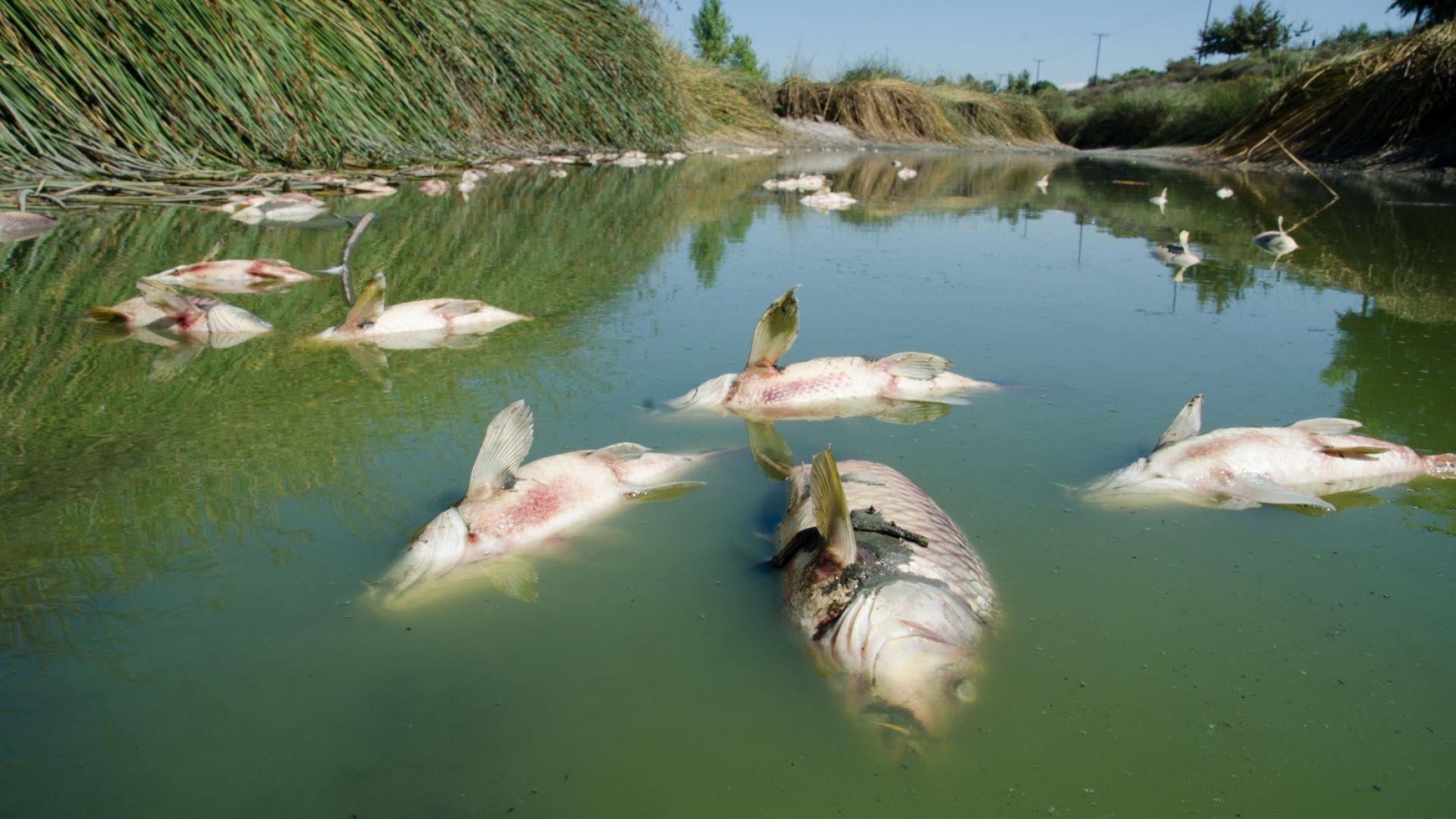 20 тона риба измря в германско езеро заради недостиг на кислород