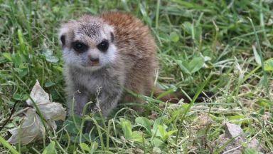 Тукан, сурикати и лемур са новите обитатели на зоопарка в София