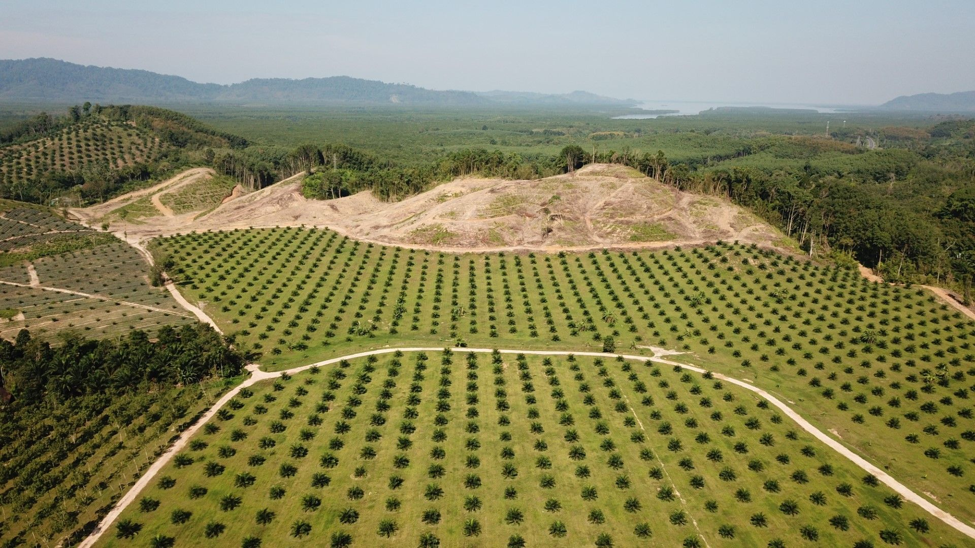 Изненада: площта на горите нараства!