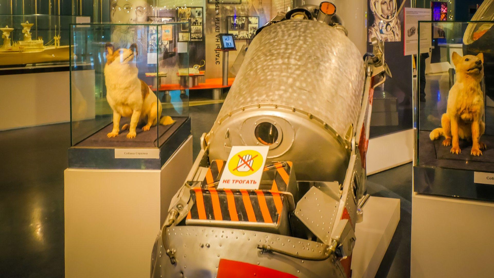 Космическите кучета Белка и Стрелка - първите оцелели след орбитален полет (видео)