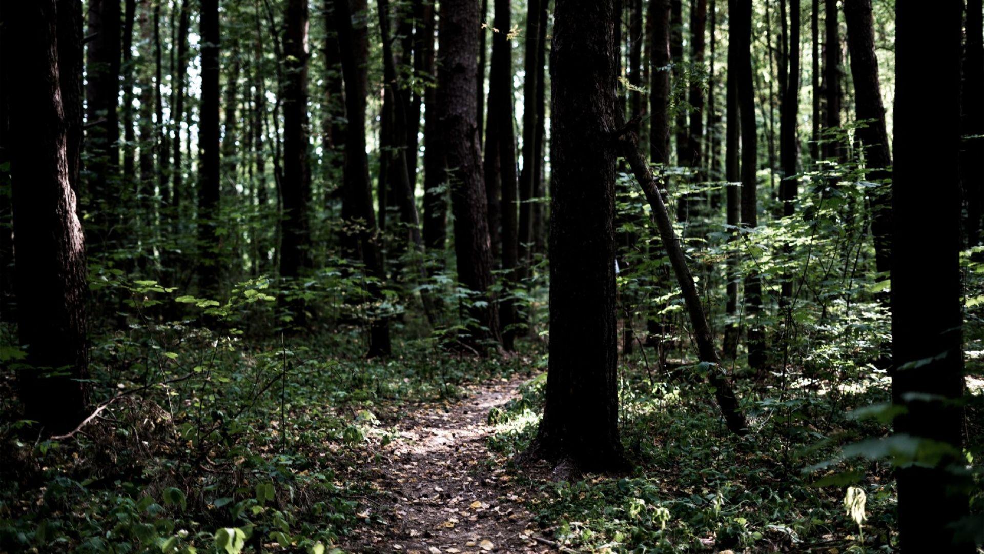 Мъж на 30 години е загинал по време на дърводобив,