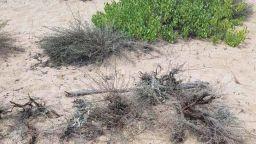 Искат законодателни промени за отчуждаване на дюни