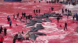 Големият лов на китове пак окървави Фарьорските острови