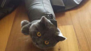 Котките, които ще ви накарат да се смеете (галерия)