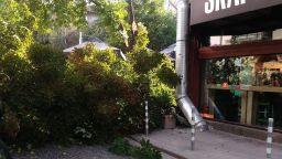 Дърво падна в центъра на София, няма пострадали