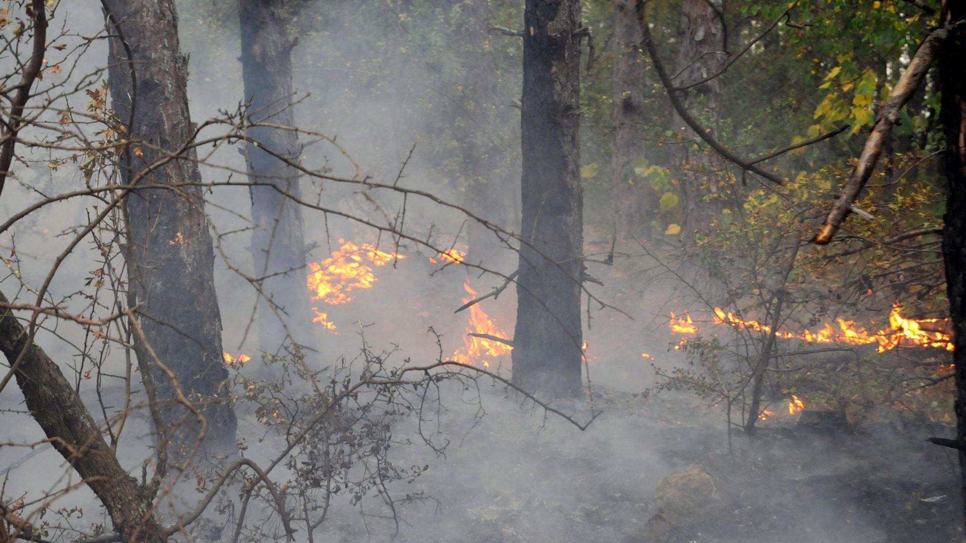 Големият пожар над Карлово се е разраснал заради силен вятър