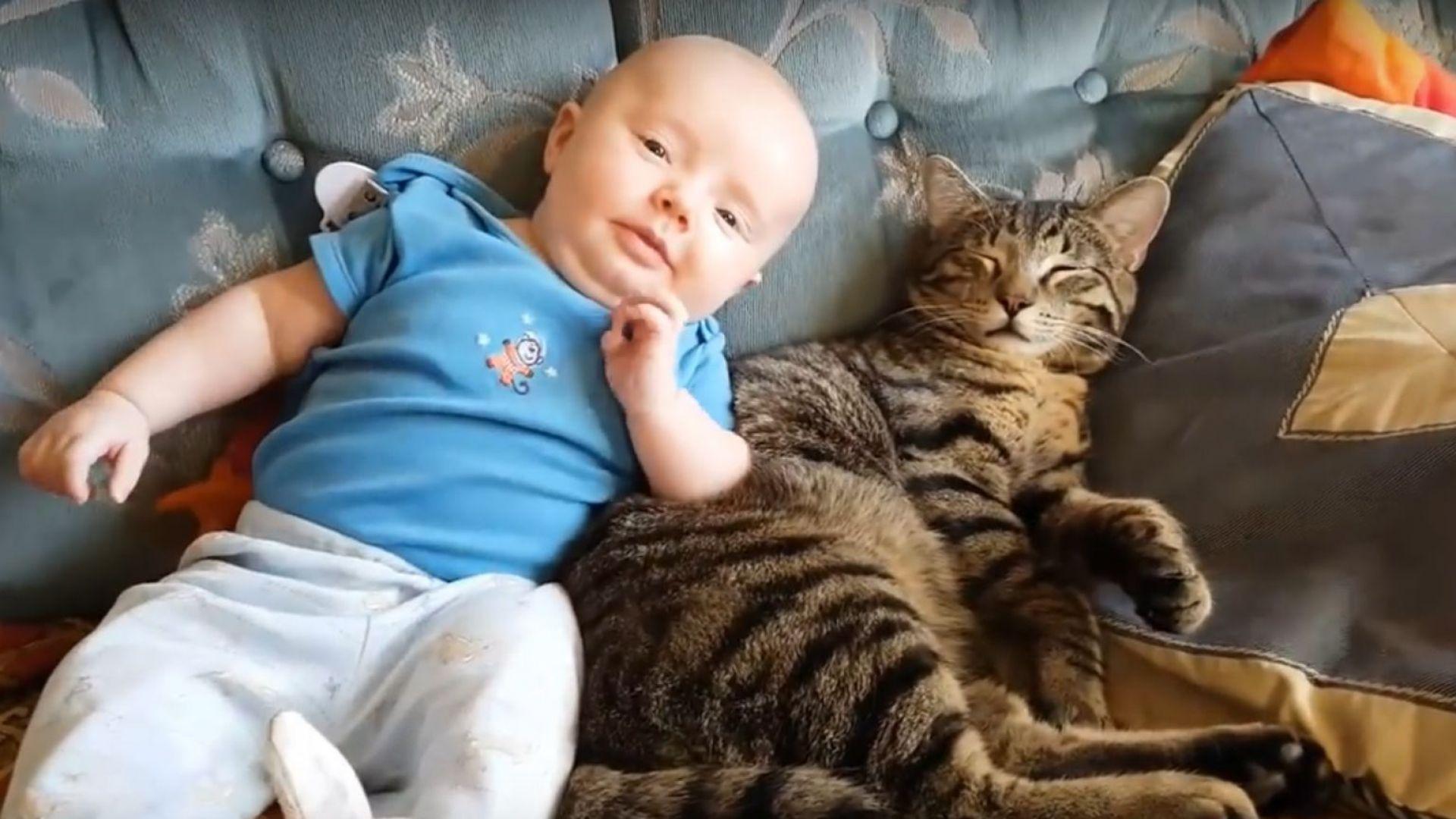 Котки и кучета виждат новороденото бебе за пръв път