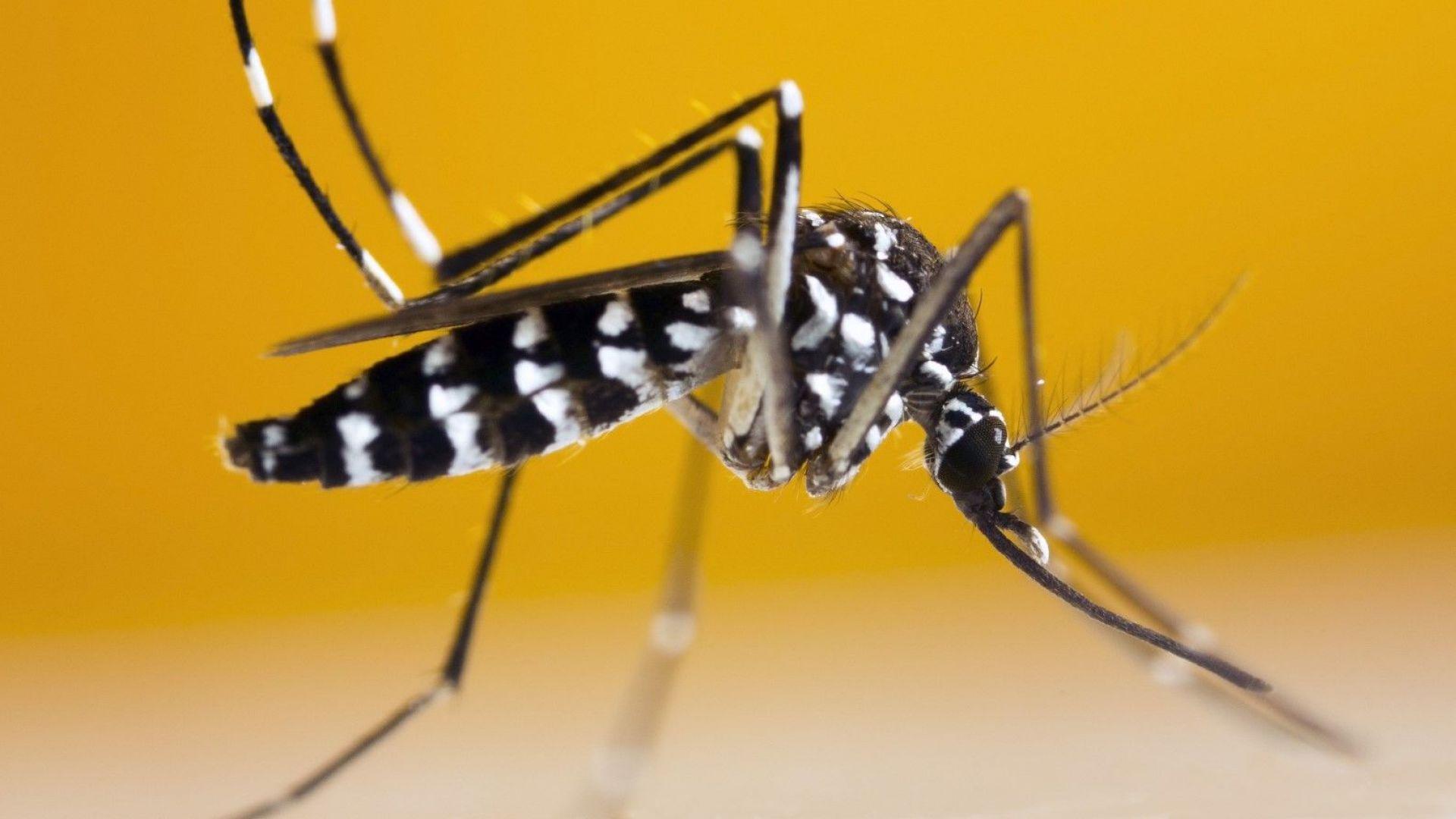 Увеличават се заболелите от менингит заради комарите