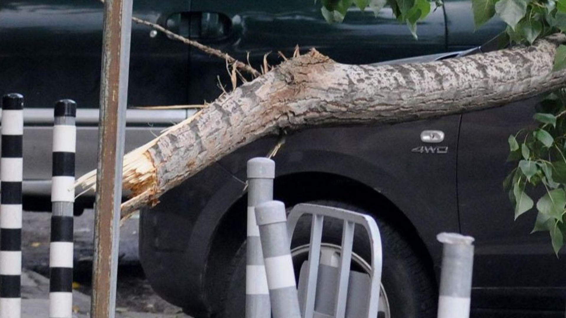 Дърво падна върху кола на улица в Пловдив