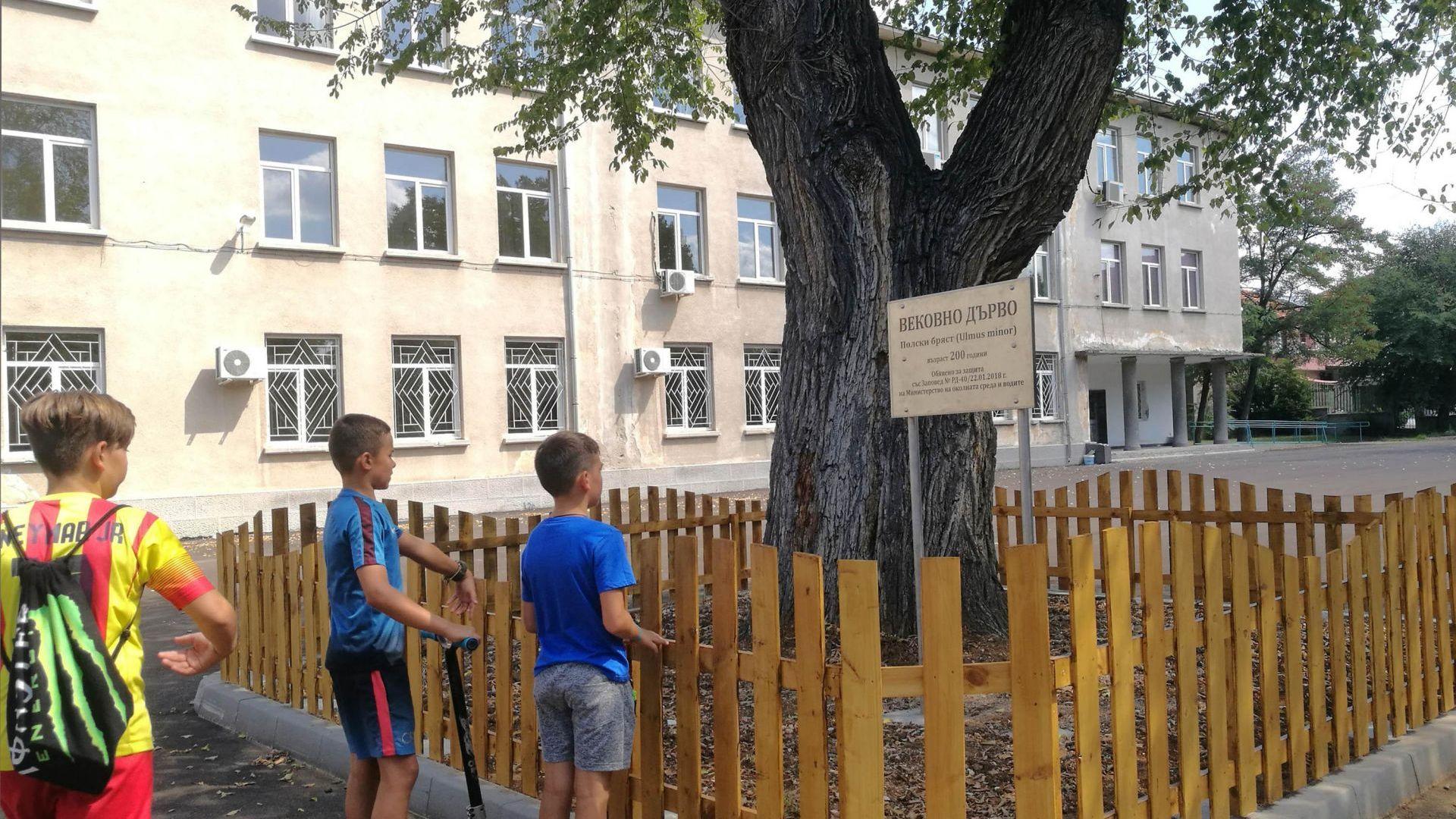 200-годишен бряст в училищен двор вече е със защита