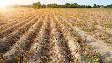 Сушата в Германия ще доведе до недостиг на храни (видео)