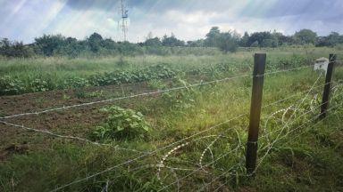 Нови случаи на чума по свинете в Румъния
