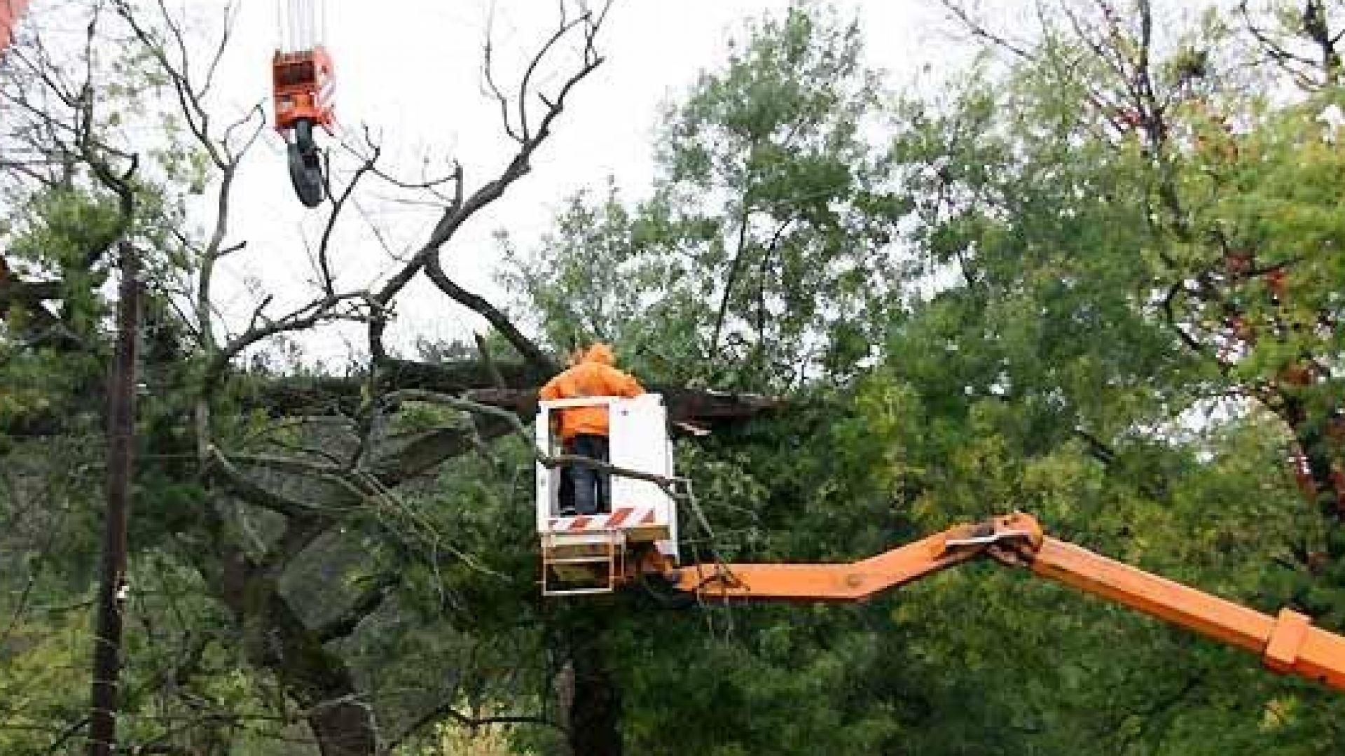 Маркират опасни дървета в Борисовата градина