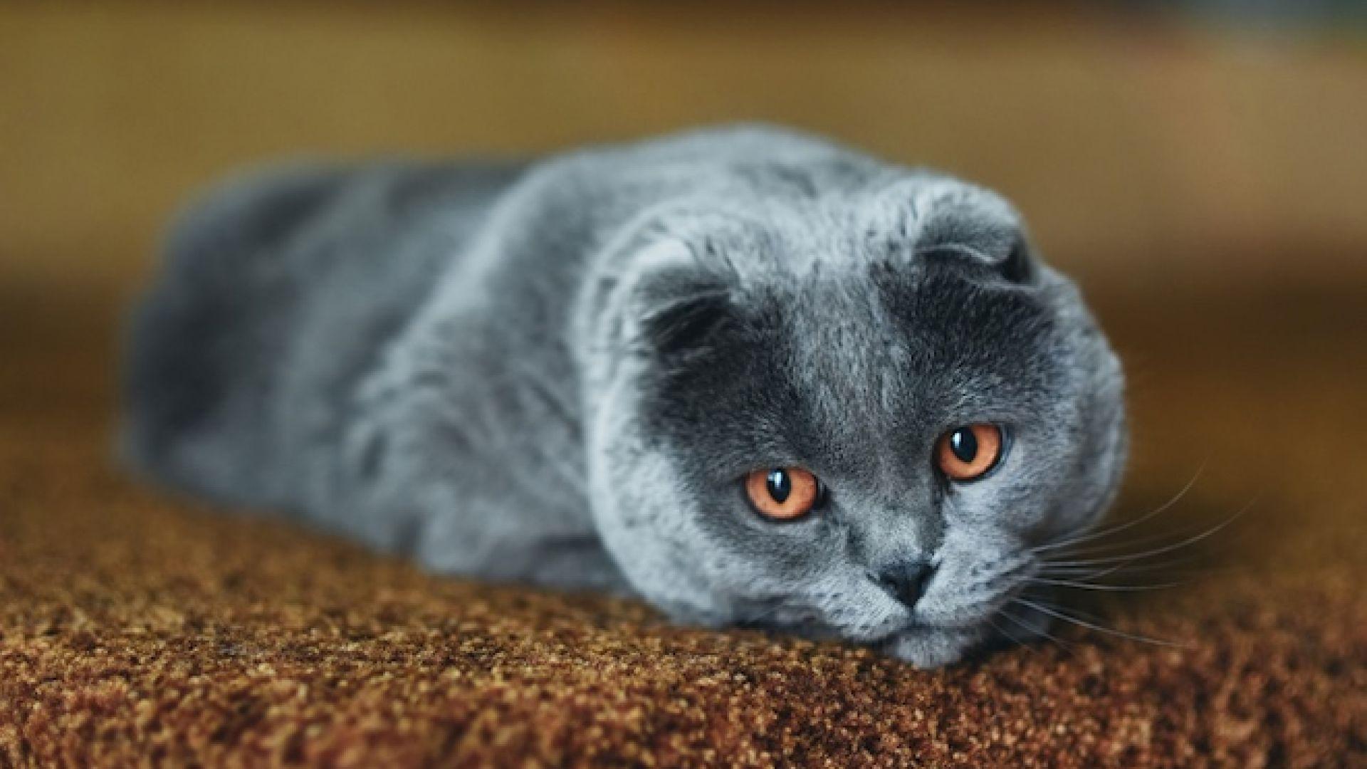 Попи е най-популярното име за котки тази година