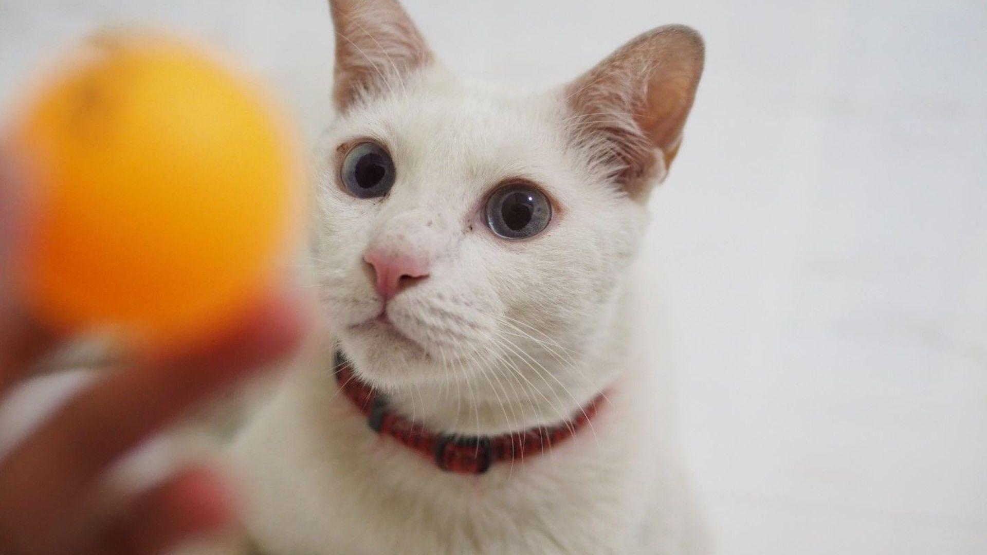 ЕС се обяви против слагането на каишки на домашните котки