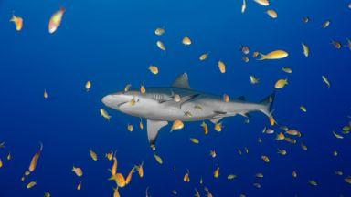 Климатичните промени убиват океанските екосистеми