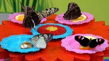 Къщата на живите пеперуди край Варна