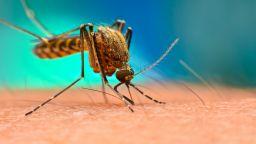 Учен разкри как комарите избират жертвите си