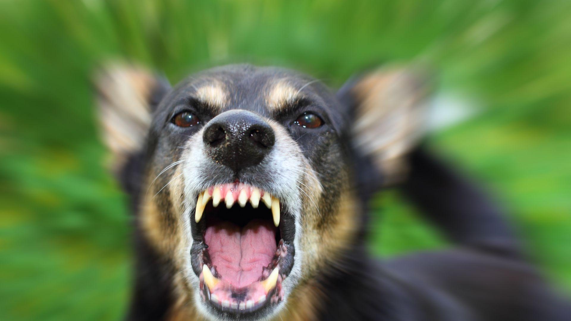 Бездомни кучета нахапали жена край Братската могила в Пловдив