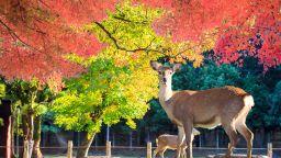 Къде на Земята есента е най-красива? (галерия)