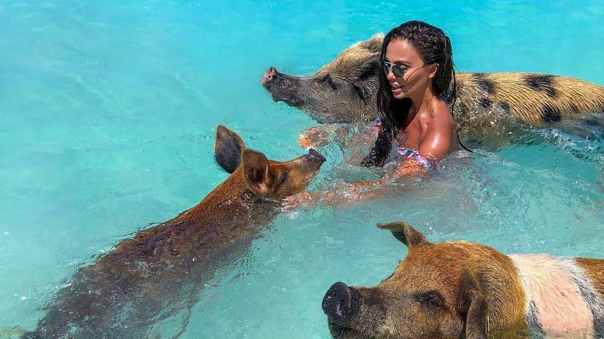 Николета плува с прасета на Бахамите (снимки)