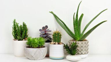 4 непретенциозни растения за офиса