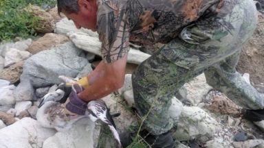 Розово фламинго, открито в Китен, оцеля след спасителна акция