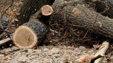 Задържаха шеф на горско стопанство - акцията на прокуратурата е в София и Своге