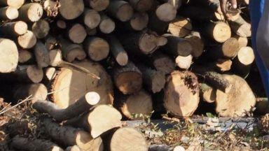 40 000 лева са открити в домовете на задържаните горски служители