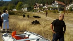 Пожарникари спасиха стадо животни от водоем