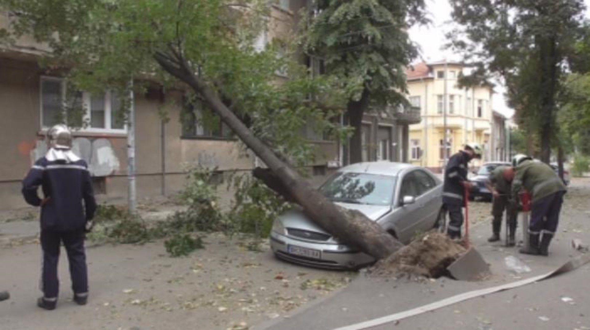 Дърво падна върху кола и във Видин