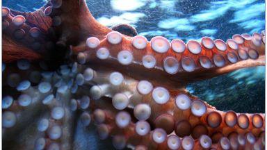 Октоподи опитаха екстази в името на науката