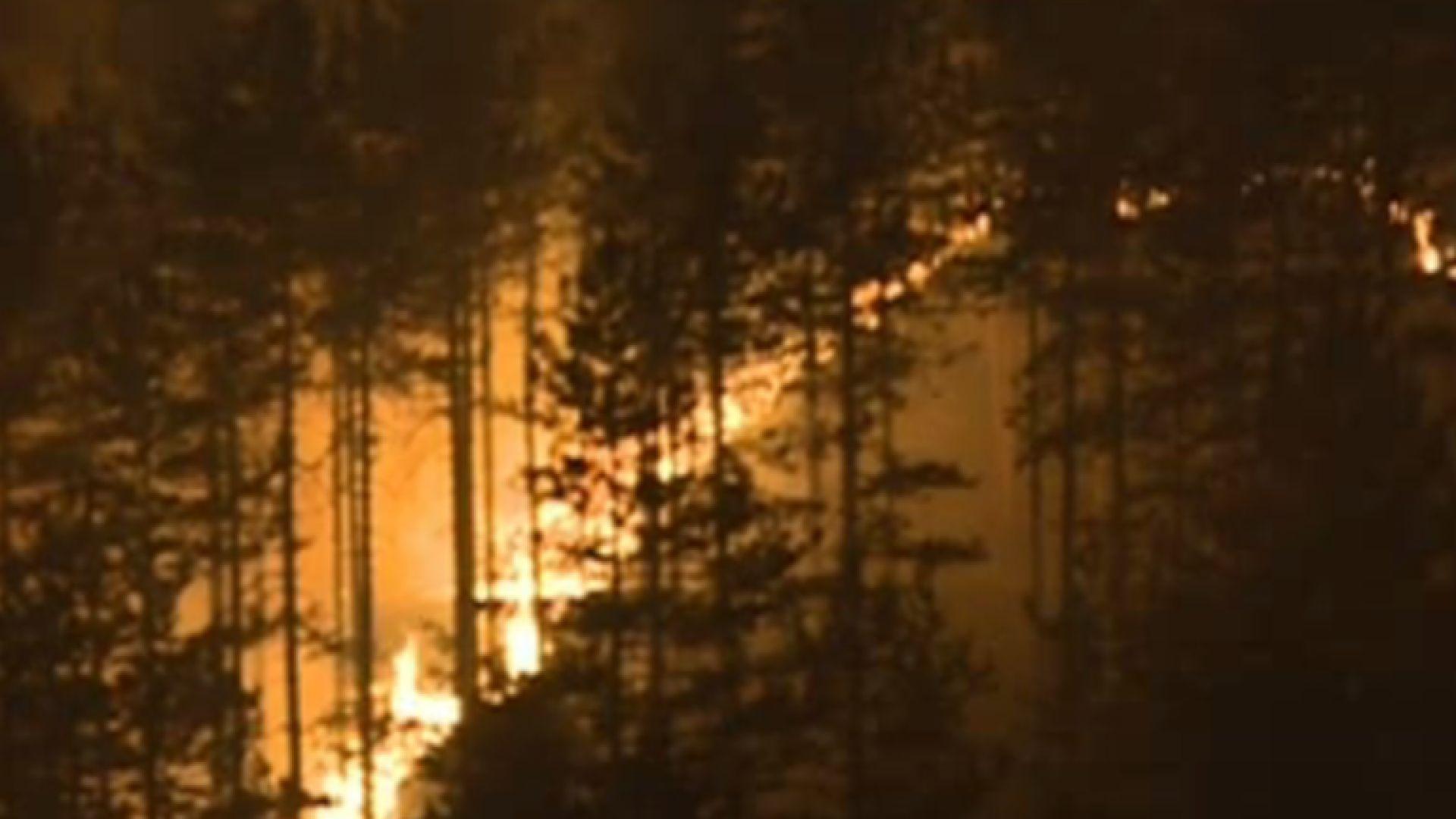 Снимка: Гори голям горски пожар край Благоевград