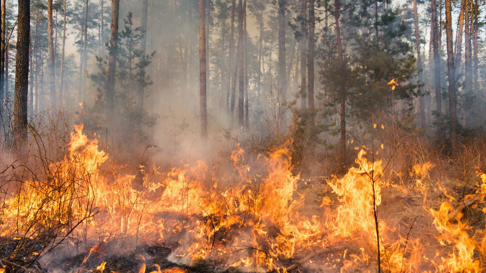 Голям пожар избухна край благоевградското село Дренково. Засегнати са над