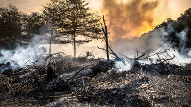 Голям пожар избухна на Ситония
