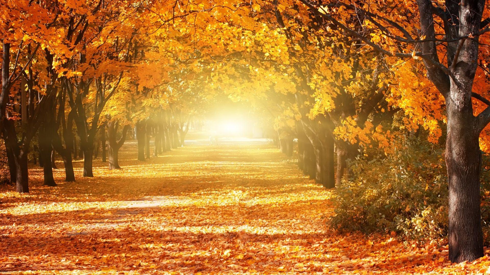 Студ или циганско лято през октомври? (галерия от карти)