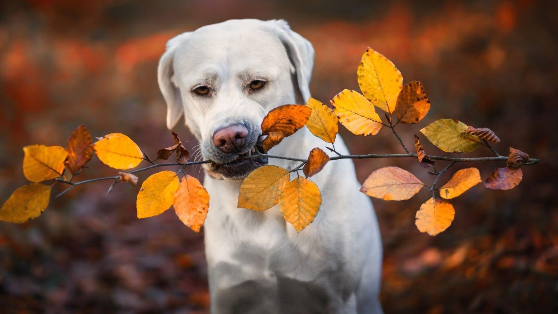 Сухо, слънчево и топло есенно време в следващите дни